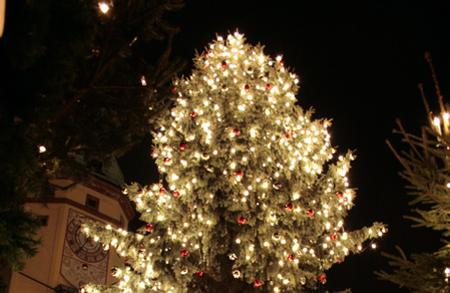 wohin mit dem weihnachtsbaum leipzig seiten. Black Bedroom Furniture Sets. Home Design Ideas